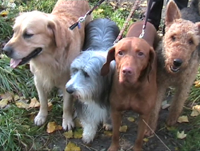 Hunde Ausführen Köln